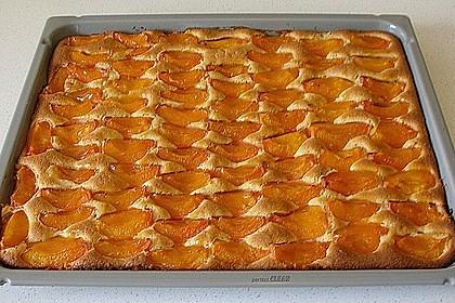 Marillenkuchen am Blech