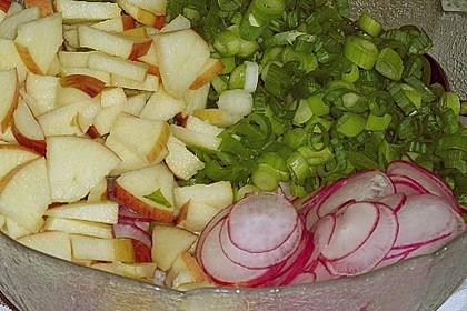 Radieschen - Salat 36