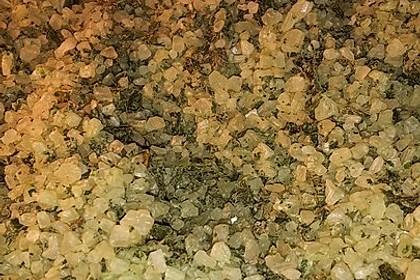 Bärlauch - Salz 14