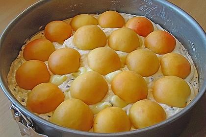 Ameisen-Marillenkuchen mit Puddingfüllung 39