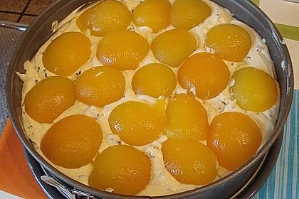 Ameisen-Marillenkuchen mit Puddingfüllung 70