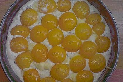 Ameisen-Marillenkuchen mit Puddingfüllung 67