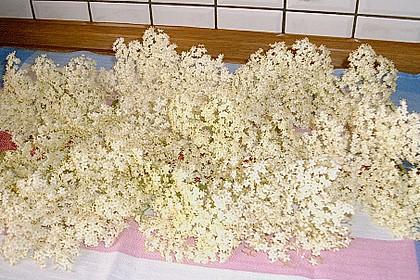 Frittierte Holunderblüten 3