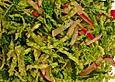 Wirsing-Radieschen-Salat