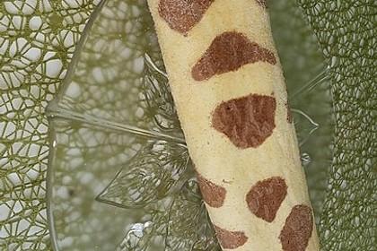 Giraffen-Biskuit-Roulade 11