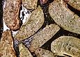 Antipasti von der Chayote