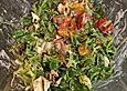 Feldsalat mit Mozzarella und Mandarinchen
