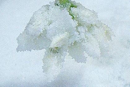 Bärlauchblüten haltbar machen 0