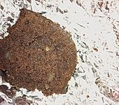 Schokoladenkuchen (Bild)