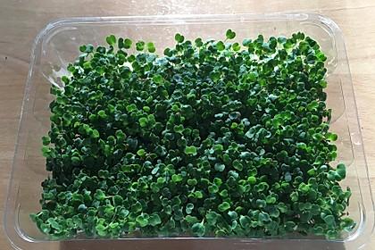 Chiasprossen aus Eigenanbau als Salat mit Rucola und Eisbergsalat 1
