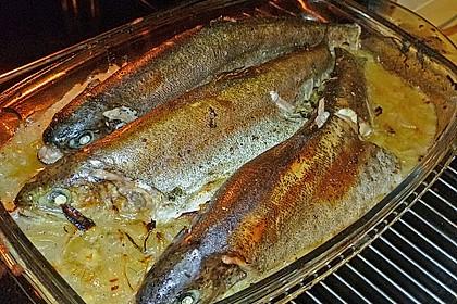 Fisch im Zwiebelbett 2