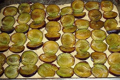 Pflaumenkuchen mit Streuseln auf dem Blech 20