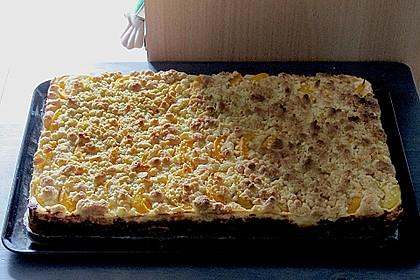 Schneller Quark-Streuselkuchen mit Obst 214