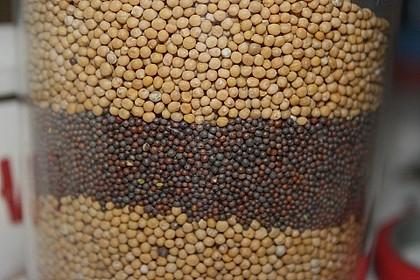 Rosmarin - Apfel - Senf 11