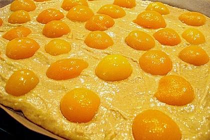 Obst-Blechkuchen 33